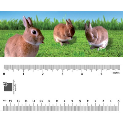 Rabbits Bookmark