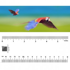 Animated Birds Bookmarks